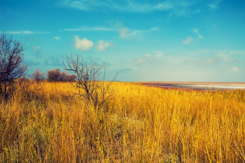 Dry grass and salty lake prairie scenery
